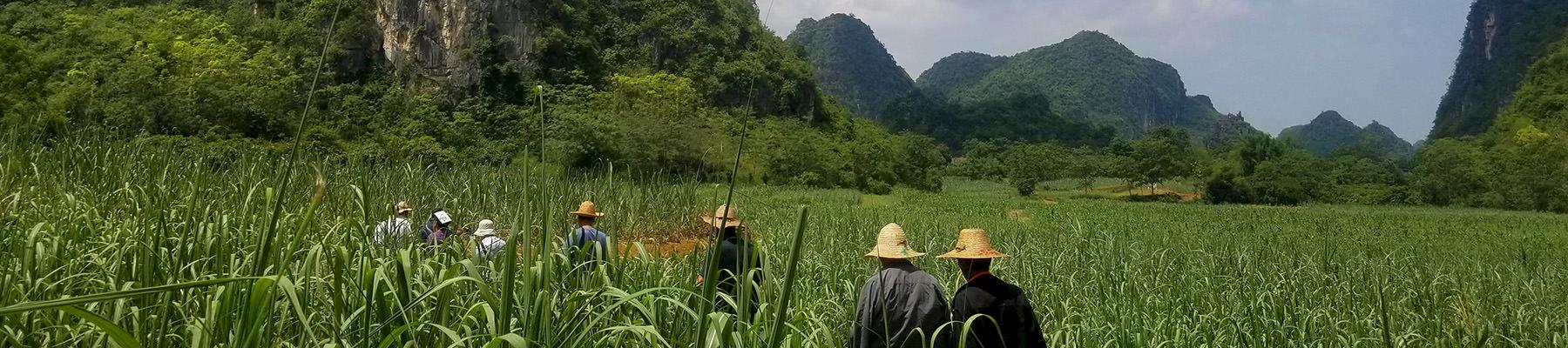 Wild plant collectors walk through fields in Chongzuo © TRAFFIC/Zhi Zheng