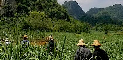 Enhancing Practical Skills for Sustainable Trade in Wild Plants in Guangxi