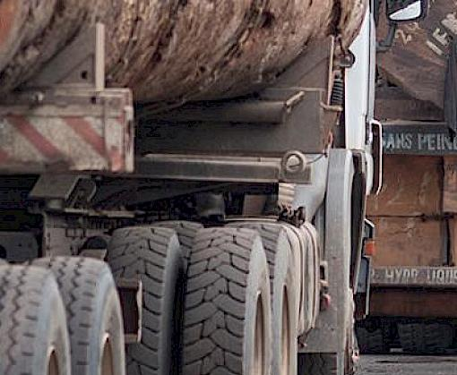Uganda hosts 6th annual forum on illegal timber trade