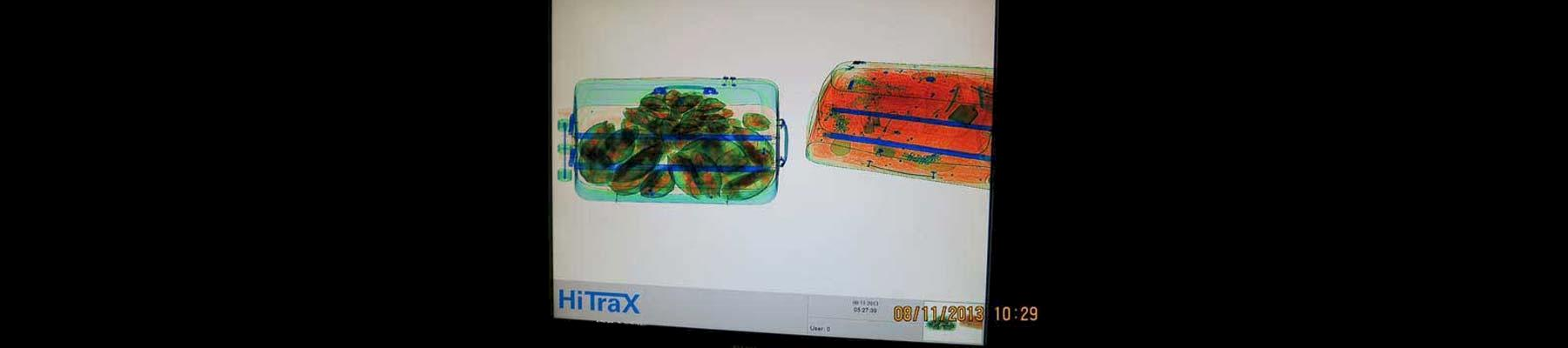Tortoises X-rayed inside a suitcase © Panjit Tansom / TRAFFIC