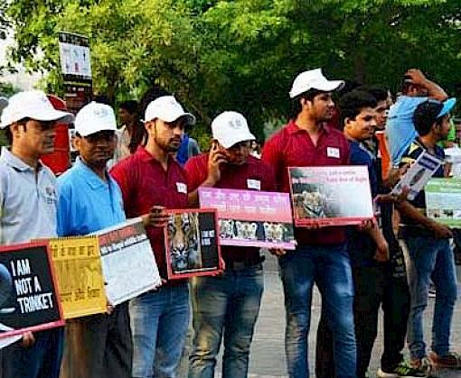Zero tolerance for illegal wildlife trade pledged in New Delhi on World Environment Day