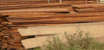 Kenya hosts timber trade forum
