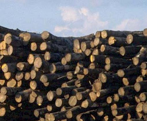 Countries agree measures for implementation of Zanzibar Declaration on timber trade